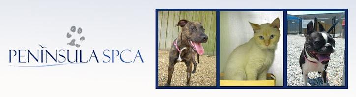 Peninsula SPCA