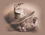 Gato de bruxa