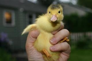 more cuteness!