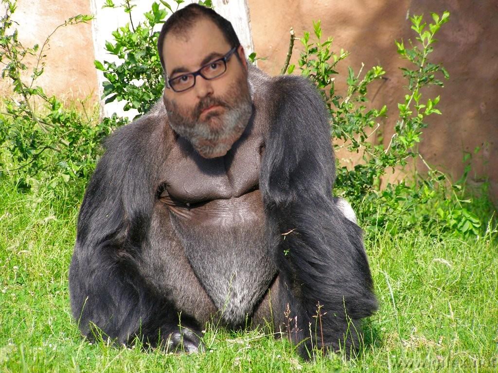 almasi erik gorila