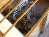 Bastidores do Zoológico BH