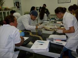 Laboratorio de ZOOLOGIA UNI-BH