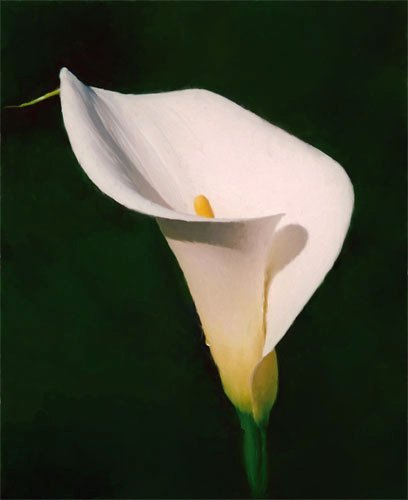 [lily]