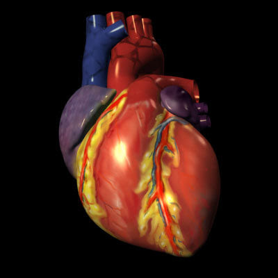 Animated human heart - photo#23
