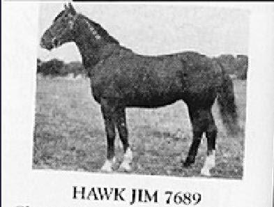Hawk Jim