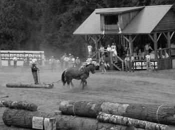 Justin Morgan Horse