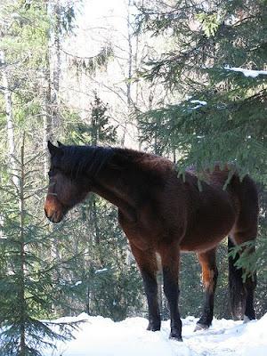 caballo castaño oscuro invierno