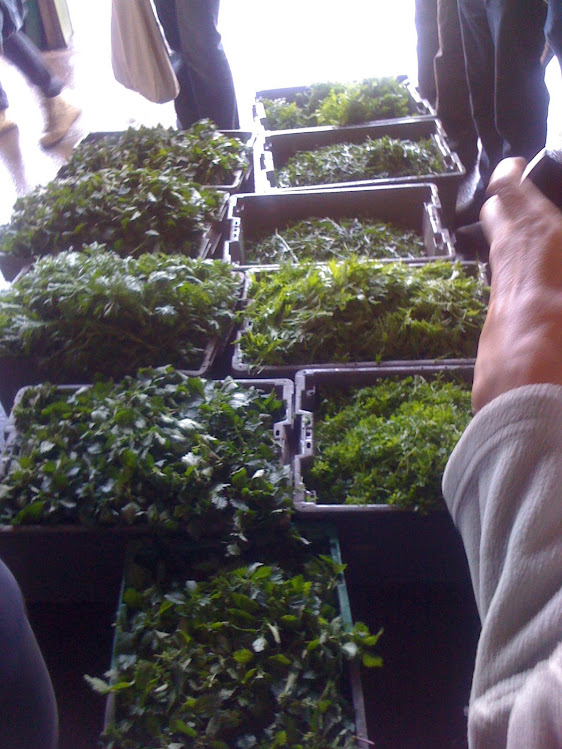 Herb Harvest @ Star Route Farms