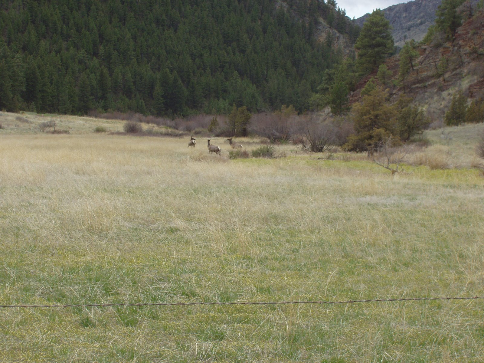 spotting elk on my b-day, gotta be a good sign.