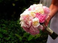FLORES+2 Flores!