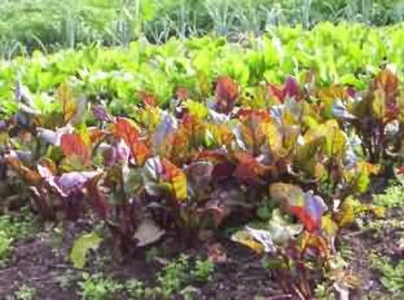 La nueva caravana huerta organica for Plantas para huerta organica