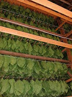tobacco curing barn