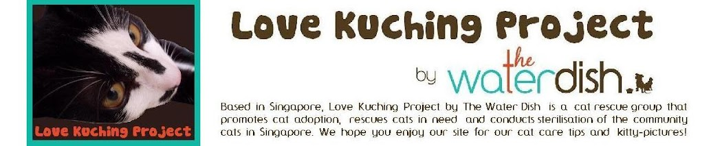 Love Kuching Project @luvkuching by The Water Dish - kitten adoption, rescue, TNR