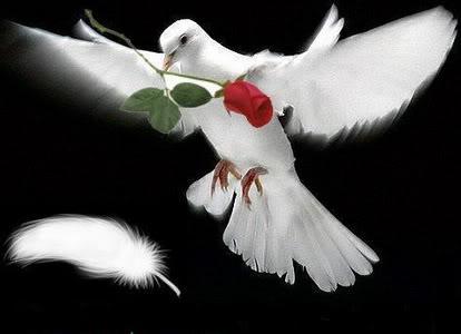Palestine My Heart With U
