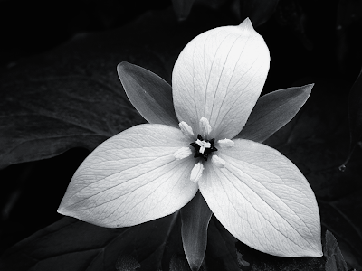 black and white pictures of cartoon flowers