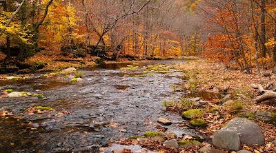 66 Square Feet (Plus) Catskills in Fall