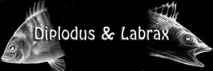 Diplodus & Labrax
