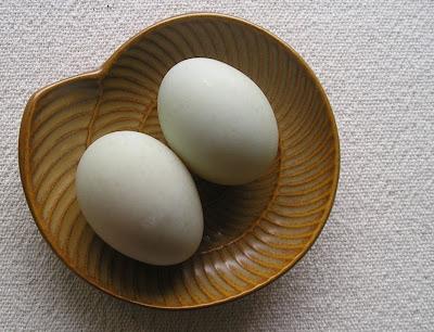 Indian Runner Duck Eggs