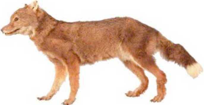 Lista de Animales extintos (recientes)