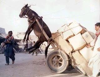 donkey cart falling over