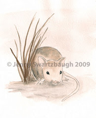 Little Harvest Field Mouse