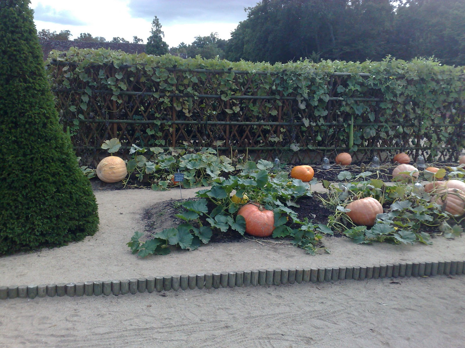 pumpkins beautiful vegetable gardens pinterest