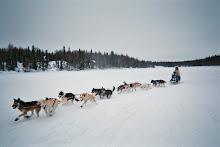 Susitna 100 Alaska 2008