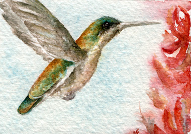 watercolor hummingbird painting