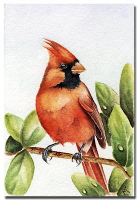 cardinal watercolour painting