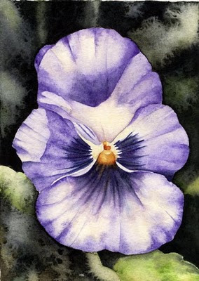 watercolour pansy painting