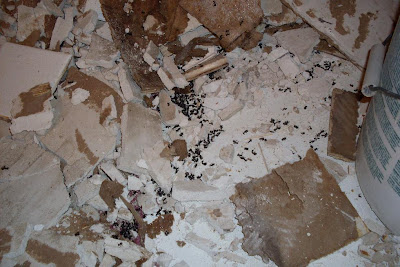 close-up of ant colony found behind bathtub
