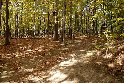 shady section of Crescent Trail, Town of Perinton NY