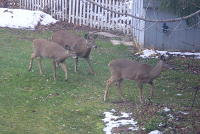 three deer head for the garden