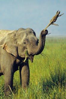 elephant220-1_1678799f.jpg