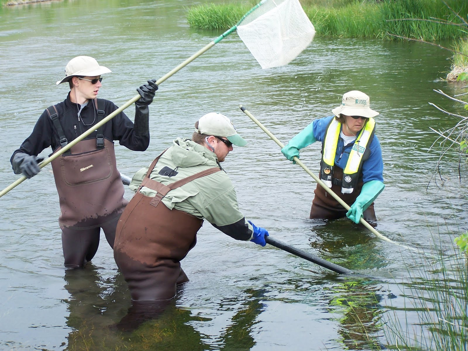 Electro-fishing.