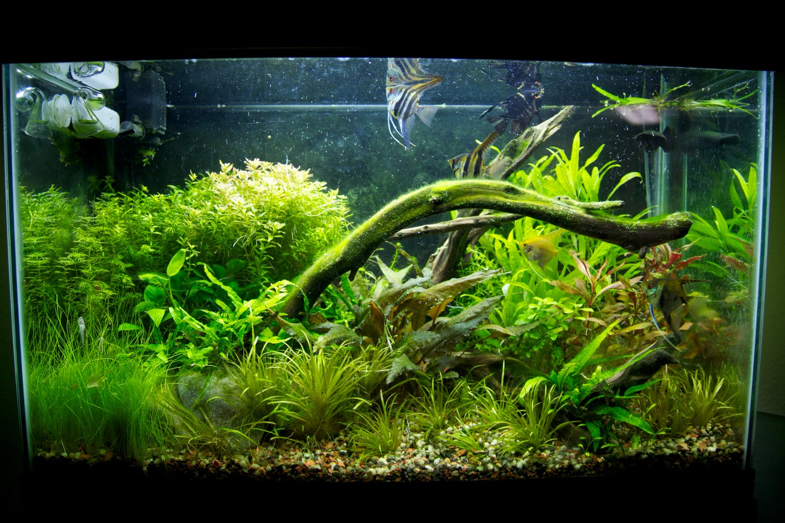 russell 39 s aquarium journals 29 gallon planted tank. Black Bedroom Furniture Sets. Home Design Ideas