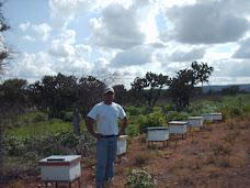 No faltó oportunidad para visitar colmenares de distintos apicultores