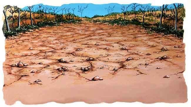 El suelo clases de suelo for Lo ultimo en suelos
