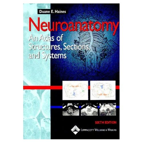 Neuroanatomy Essay Questions