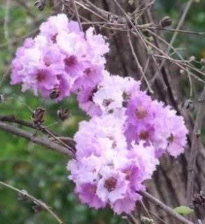 Nakhon Sawan flower