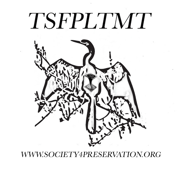 The Society for the Preservation of Lost Things and Missing TIme