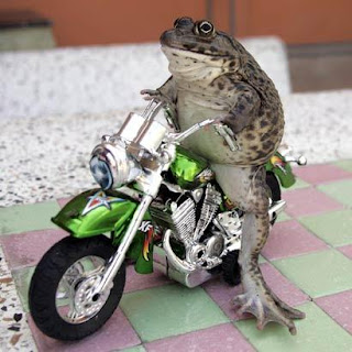 motorcycle-riding frog