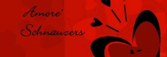 Amore Schnauzers