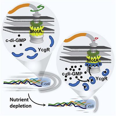 Flagelo bacteriano in situ: Darwin não explica a origem e nem a evolução disso!!!  0+(1)