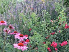 Herb Garden 2009