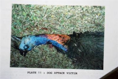 Cassowary attack victim - photo#14