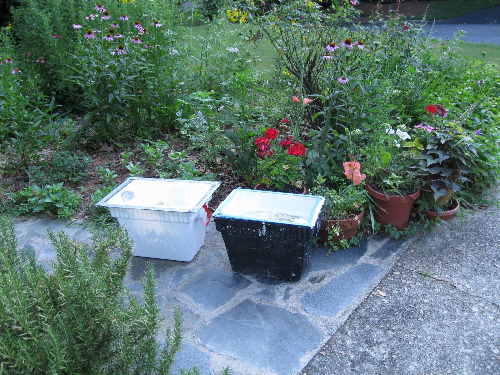 Linda39s Bees Using The Solar Wax Melter