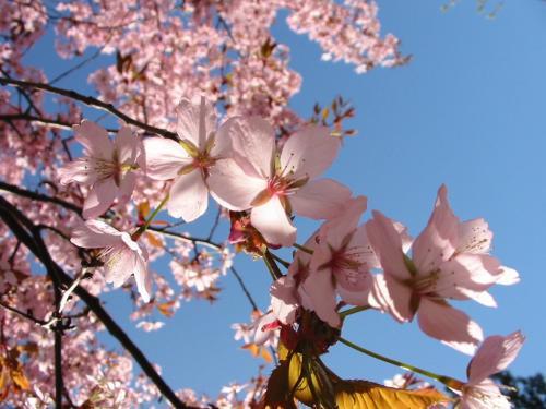 A Primavera já chegou!