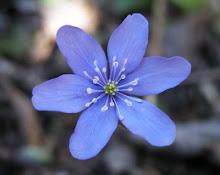 La  flor mágica...