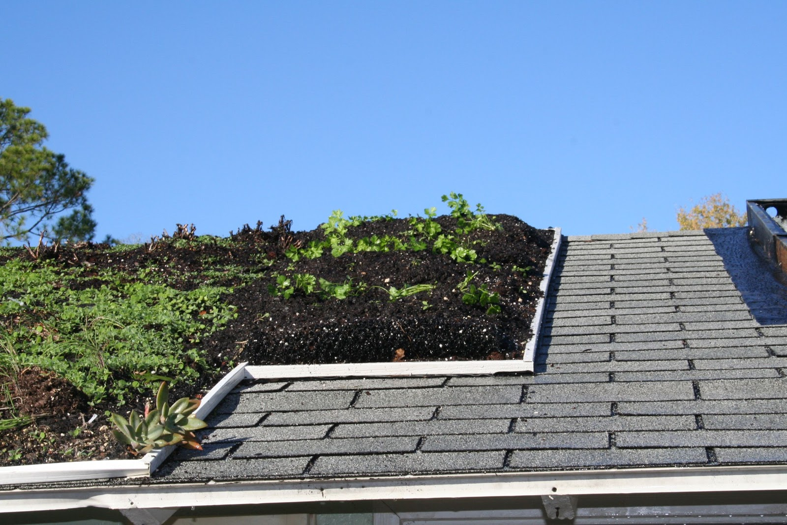 ... Perspective: Lightweight, Deeper Soil Rooftop Gardens for Permaculture